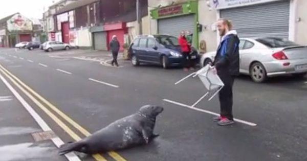 stiva teo,愛爾蘭景點, sammy 海豹2